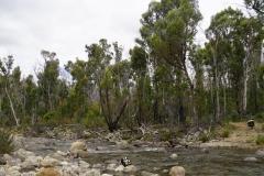 tasmanien 095 copyright piotr nogal
