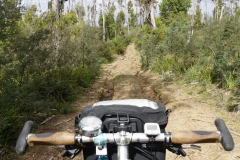 tasmanien 096 copyright piotr nogal