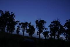 tasmanien 099 copyright piotr nogal