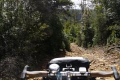 tasmanien 109 copyright piotr nogal