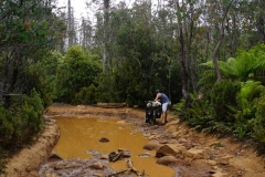 tasmanien 111 copyright piotr nogal