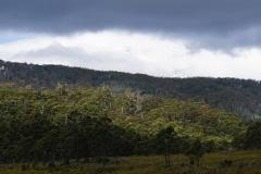 tasmanien 119 copyright piotr nogal