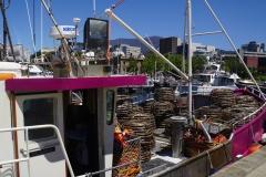 tasmanien 144 copyright piotr nogal
