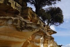 tasmanien 172 copyright piotr nogal