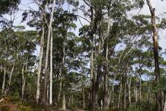 tasmanien 176 copyright piotr nogal