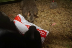 tasmanien 180 copyright piotr nogal