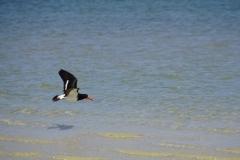 tasmanien 186 copyright piotr nogal