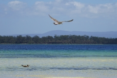 tasmanien 190 copyright piotr nogal