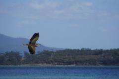 tasmanien 191 copyright piotr nogal