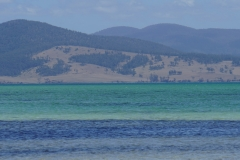tasmanien 193 copyright piotr nogal