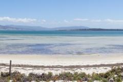 tasmanien 196 copyright piotr nogal