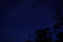 tasmanien 200 copyright piotr nogal