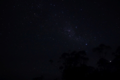 tasmanien 202 copyright piotr nogal