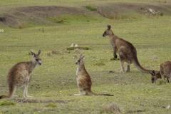 tasmanien 209 copyright piotr nogal