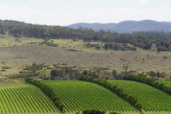 tasmanien 219 copyright piotr nogal