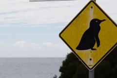 tasmanien 224 copyright piotr nogal