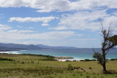 tasmanien 228 copyright piotr nogal