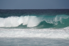 tasmanien 232 copyright piotr nogal