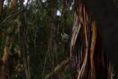 tasmanien 233 copyright piotr nogal