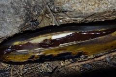 tasmanien 239 copyright piotr nogal