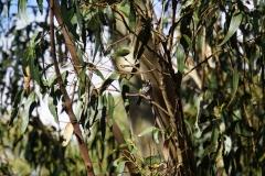 tasmanien 240 copyright piotr nogal