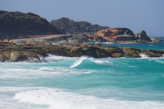 tasmanien 249 copyright piotr nogal