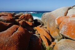 tasmanien 253 copyright piotr nogal