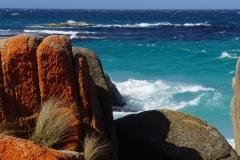 tasmanien 254 copyright piotr nogal