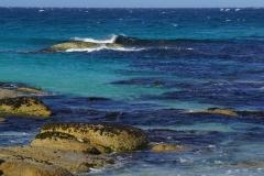 tasmanien 257 copyright piotr nogal