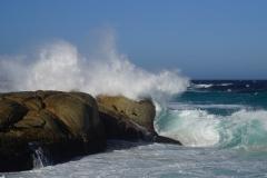 tasmanien 258 copyright piotr nogal