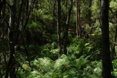 tasmanien 262 copyright piotr nogal