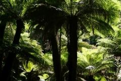tasmanien 264 copyright piotr nogal