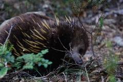 tasmanien 268 copyright piotr nogal