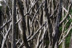 tasmanien 270 copyright piotr nogal