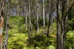 tasmanien 280 copyright piotr nogal