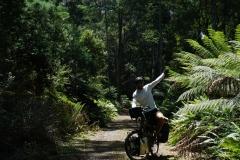 tasmanien 281 copyright piotr nogal