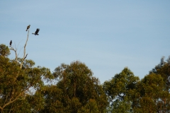 tasmanien 287 copyright piotr nogal