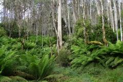 tasmanien 309 copyright piotr nogal