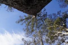 tasmanien 311 copyright piotr nogal