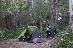 tasmanien 313 copyright piotr nogal