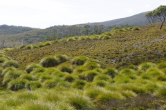 tasmanien 317 copyright piotr nogal