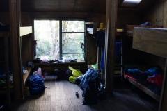 tasmanien 356 copyright piotr nogal