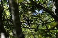 tasmanien 362 copyright piotr nogal