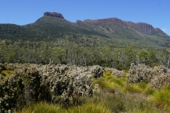 tasmanien 363 copyright piotr nogal