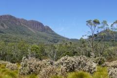 tasmanien 364 copyright piotr nogal