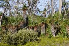 tasmanien 374 copyright piotr nogal
