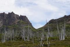 tasmanien 388 copyright piotr nogal