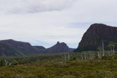 tasmanien 389 copyright piotr nogal