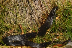 tasmanien 395 copyright piotr nogal