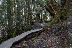 tasmanien 397 copyright piotr nogal